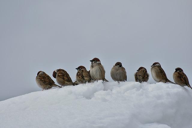drobné ptactvo